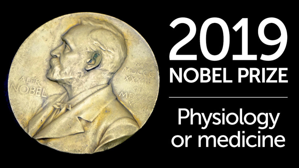 Nobel prize: How cells sense oxygen